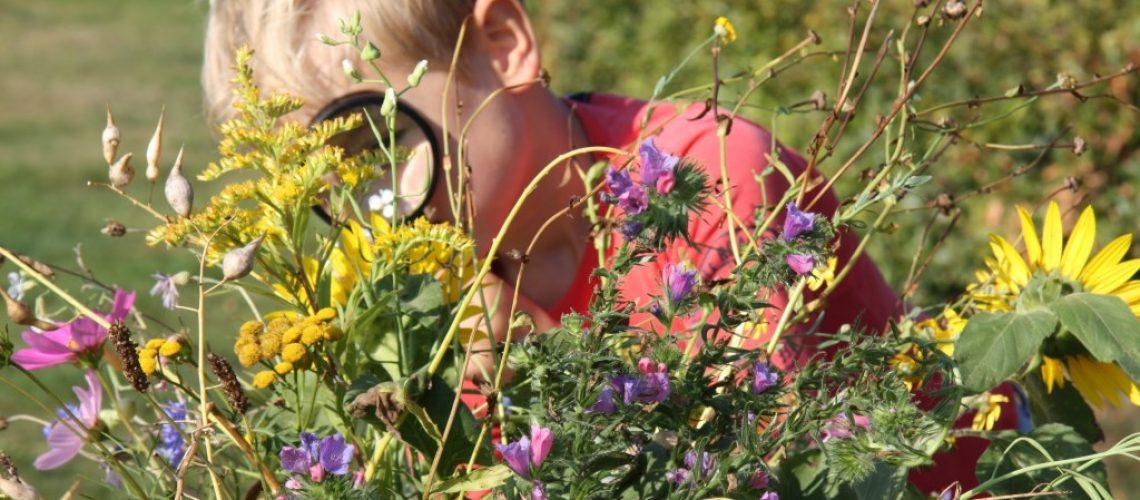 ontdekken bloemen